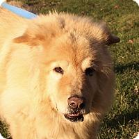 Adopt A Pet :: Willie - Jackson, MI