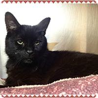 Cat Adoption Columbus Ga