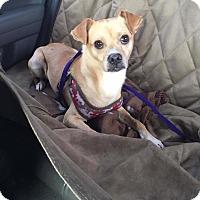 Adopt A Pet :: Bowler - Rosamond, CA