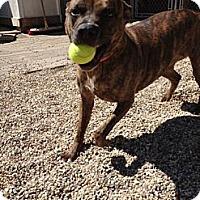 Adopt A Pet :: Veruca - Vernon Hills, IL