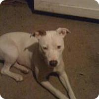 Adopt A Pet :: Nova - Justin, TX