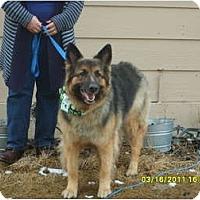 Adopt A Pet :: Meggie - Hamilton, MT