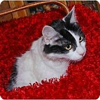 Adopt A Pet :: Willow - Colmar, PA