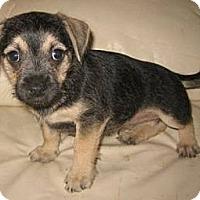 Adopt A Pet :: Sailor - Phoenix, AZ