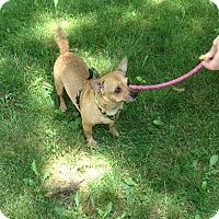 Adopt A Pet :: Emma - Washington, PA