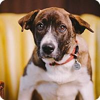 Adopt A Pet :: Alex - Portland, OR