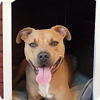 Adopt A Pet :: Gordon - Cerritos, CA