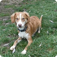 Adopt A Pet :: lane - mooresville, IN
