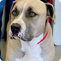 Adopt A Pet :: Rocco - San Antonio, TX