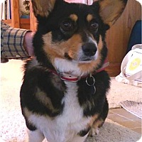 Adopt A Pet :: Emma - Salem, OR