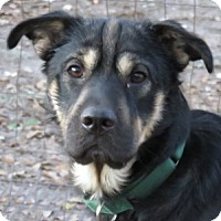 Adopt A Pet :: Scooby!  Behaved & Charming! - St Petersburg, FL