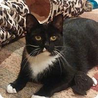 Adopt A Pet :: Linus - Lenhartsville, PA