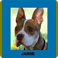 Adopt A Pet :: Jaimie - Memphis, TN