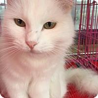 Adopt A Pet :: Moonshine - Austin, TX