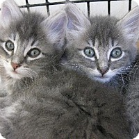 Adopt A Pet :: Kittens Available! - Burlingame, CA