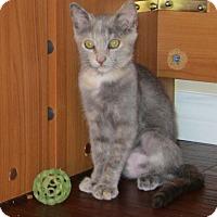 Adopt A Pet :: Catera - Orange, CA