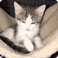 Adopt A Pet :: Star - La Canada Flintridge, CA