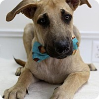 Adopt A Pet :: Rocky - Picayune, MS