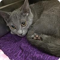 Adopt A Pet :: Cilantro - Lunenburg, MA