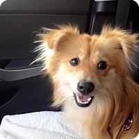 Adopt A Pet :: Tee - Alderson, WV