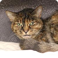 Adopt A Pet :: Morning Glory - Midland, MI