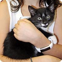 Adopt A Pet :: Jack - Harrison, NY