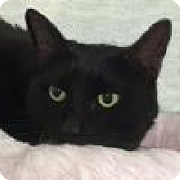 Adopt A Pet :: Amy - Tiburon, CA