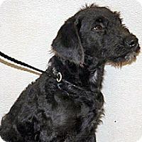 Adopt A Pet :: 322943 - Wildomar, CA