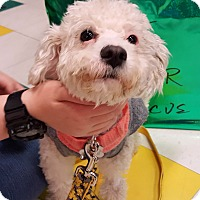 Adopt A Pet :: *AARF* - Wheatley-Needs Foster - Detroit, MI