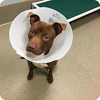 Adopt A Pet :: Parker 6129 - Columbus, GA