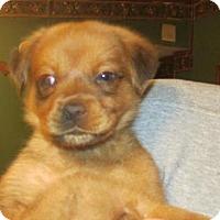 Adopt A Pet :: Shirley - Rocky Mount, NC
