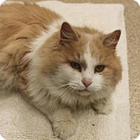 Adopt A Pet :: Noah - Naperville, IL