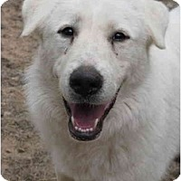 Adopt A Pet :: Keely - Greenville, SC