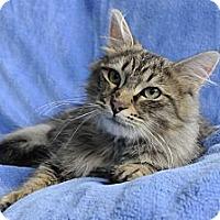 Adopt A Pet :: Valentino - Columbus, OH