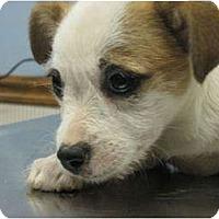 Adopt A Pet :: ID 540 - Plainfield, CT