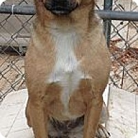 Adopt A Pet :: Sandy - Hazard, KY