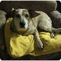 Adopt A Pet :: Sarah (adoption pending) - Phoenix, AZ