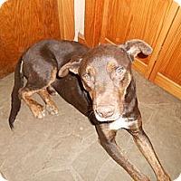 Adopt A Pet :: Cherokee - North Jackson, OH