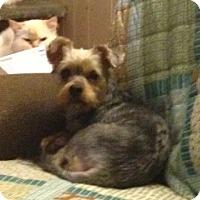 Adopt A Pet :: Junie B - Hazard, KY