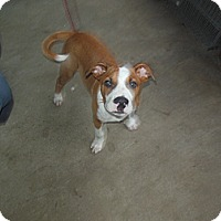 Adopt A Pet :: Peanut - Cincinnati, OH