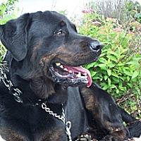 Adopt A Pet :: TYSON - Oswego, IL
