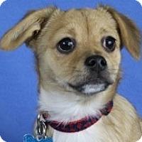 Adopt A Pet :: Ari - Minneapolis, MN