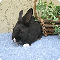 Adopt A Pet :: Harley - Bonita, CA