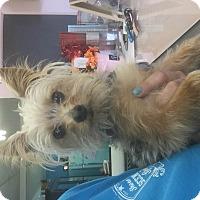 Adopt A Pet :: Gucci - Kempner, TX