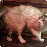 Adopt A Pet :: Andromache - Ennis, TX
