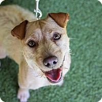 Adopt A Pet :: Zoey - Mission Viejo, CA
