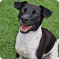 Adopt A Pet :: Oreo - Pinehurst, NC