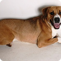 Adopt A Pet :: Robbie - Redding, CA