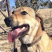 Adopt A Pet :: Mozi - Surrey, BC