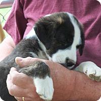 Adopt A Pet :: Bonnie - Hohenwald, TN